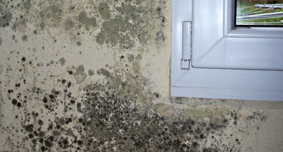 pared-moho
