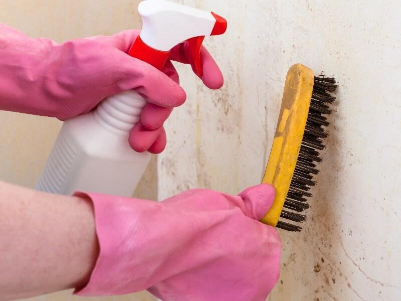 quitar humedad en paredes