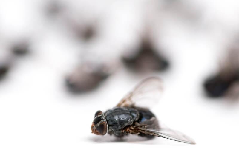 moscas por humedades en madrid