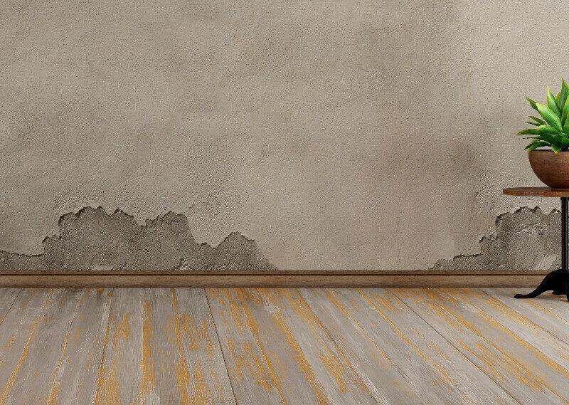 moho en las paredes