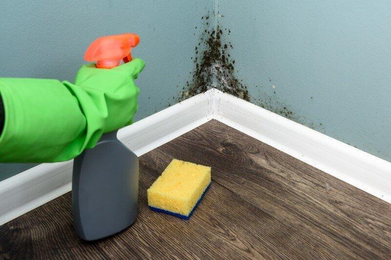 limpieza del moho