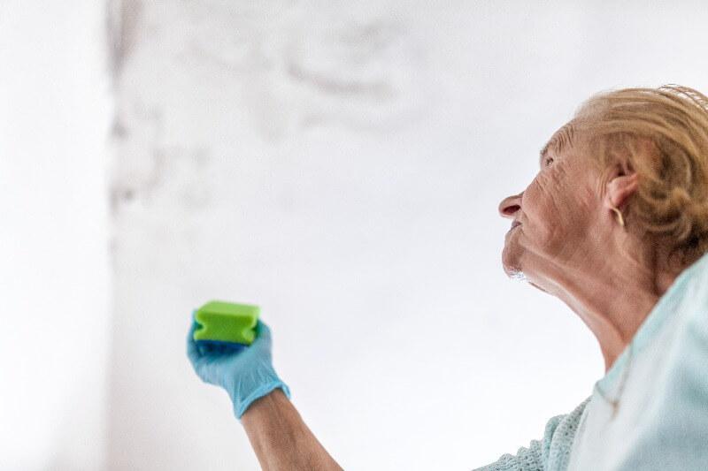 como eliminar el moho de las paredes interiores