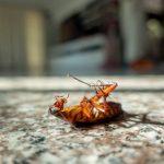 solución para la humedad-cucarachas