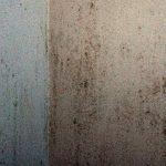 el moho en paredes