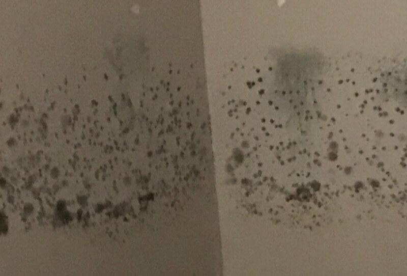 moho en las paredes de la vivienda