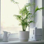 remedios caseros para la humedad por condensación