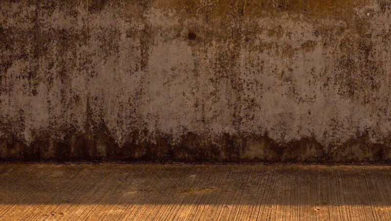 el moho de las paredes